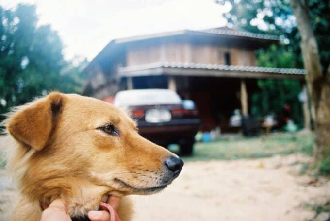 vakantie-met-hond-blogo