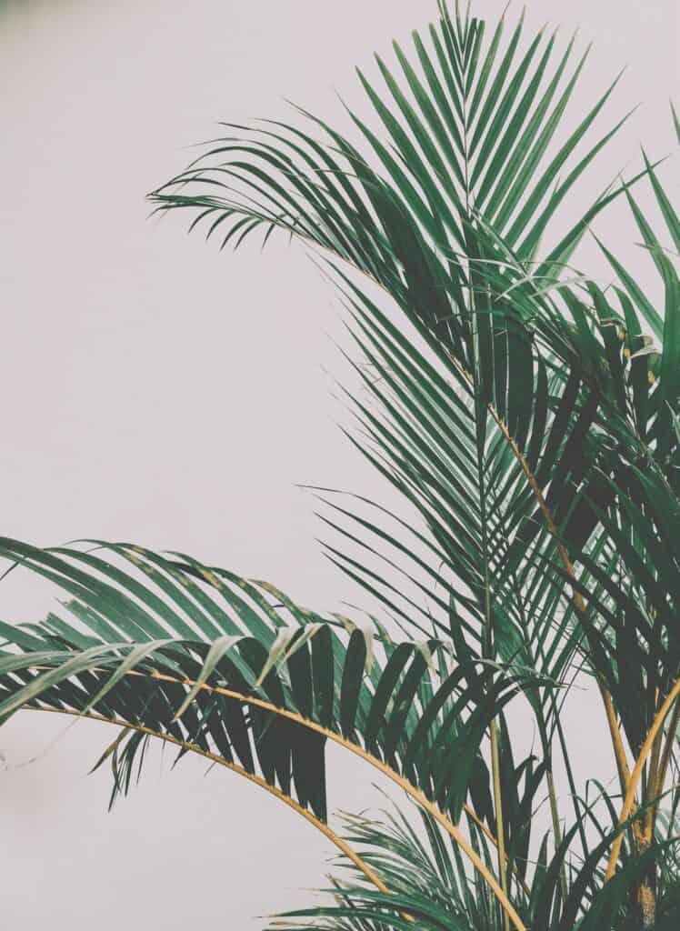 binnenplanten-gezond-palm
