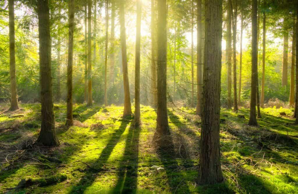 productief werken forest app