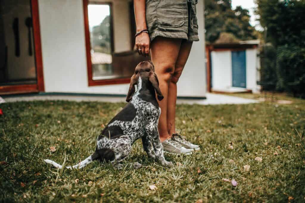 voordelen-van-een-hond